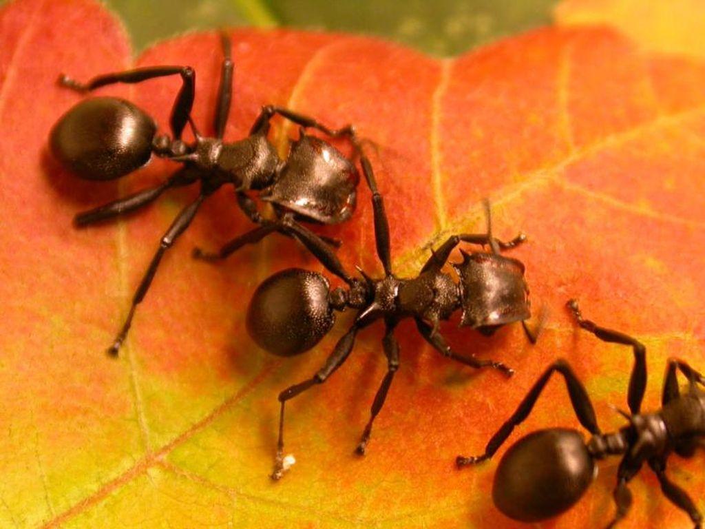 Millionen Jahre alte Symbiose: Als die Ameisen begannen, Pflanzen zu ...
